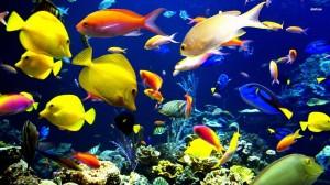 tropical-fish-digital-art-wallpaper