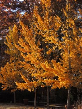 State Botanical Gardens, Athens GA