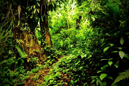 the_jungle_path3