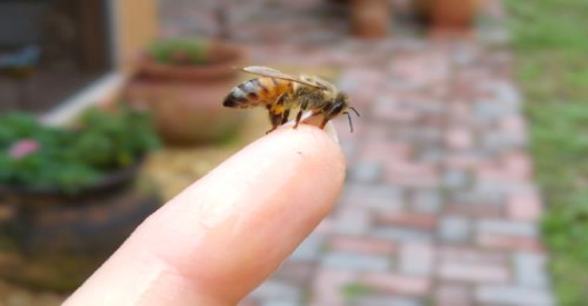 bee on my finger