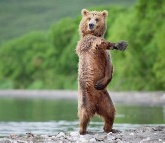 Top-10-Dancing-Animals-8